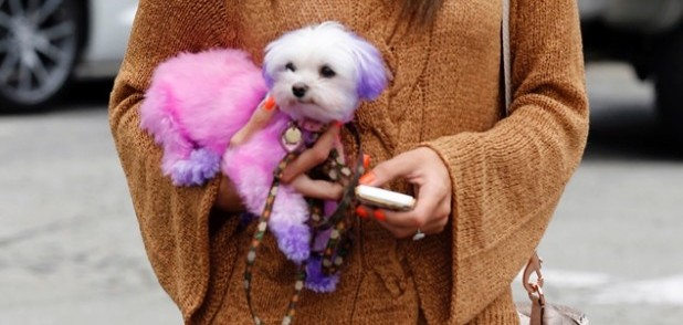Bizarre Beauty: Dip Dye Dogs