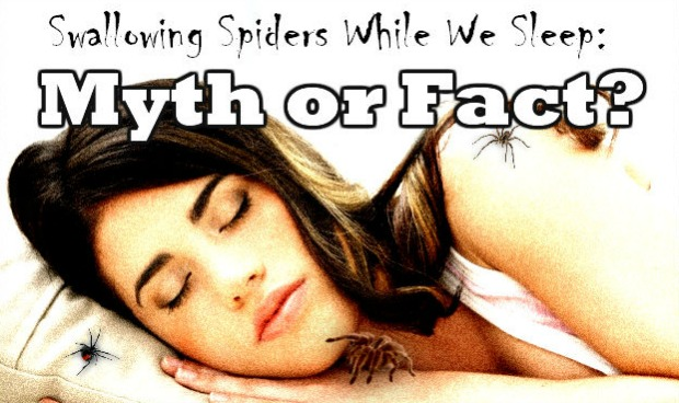 swallowingspiders