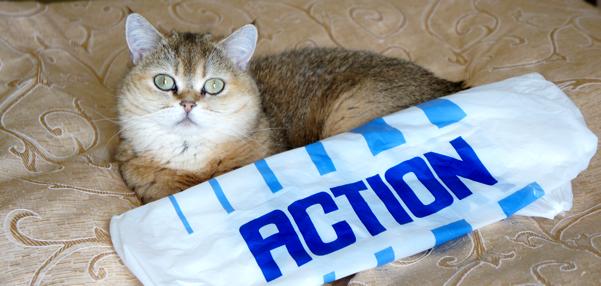 action_shirt_1