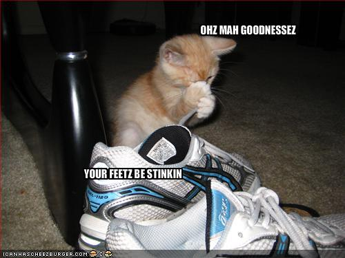 funny-pictures-cat-accuses-you-of-having-smelly-feet