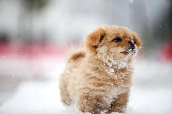 doggy snow