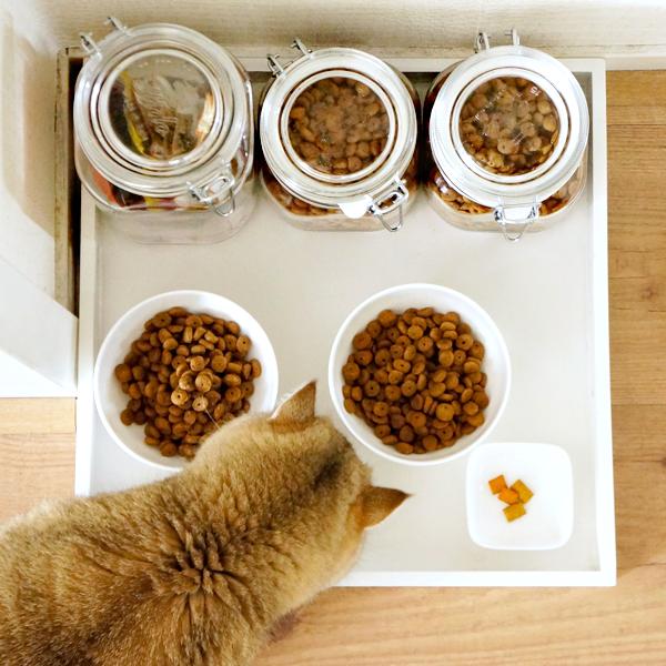 diy cat food tray_10