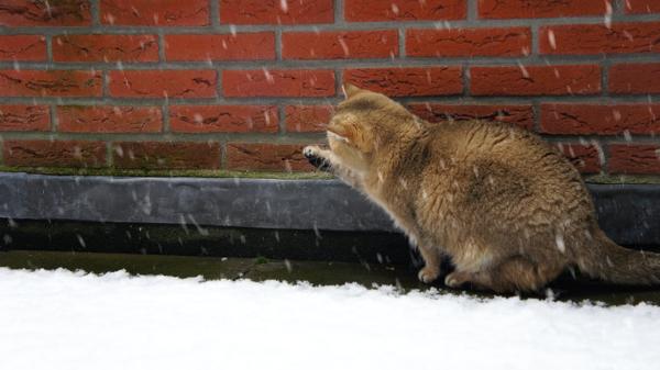 snow cats_2