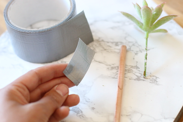 DIY vetplant pennenbakje - 6