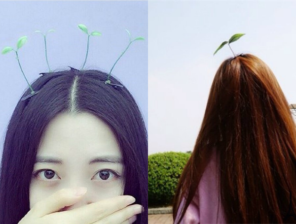 bean sprout hair trend