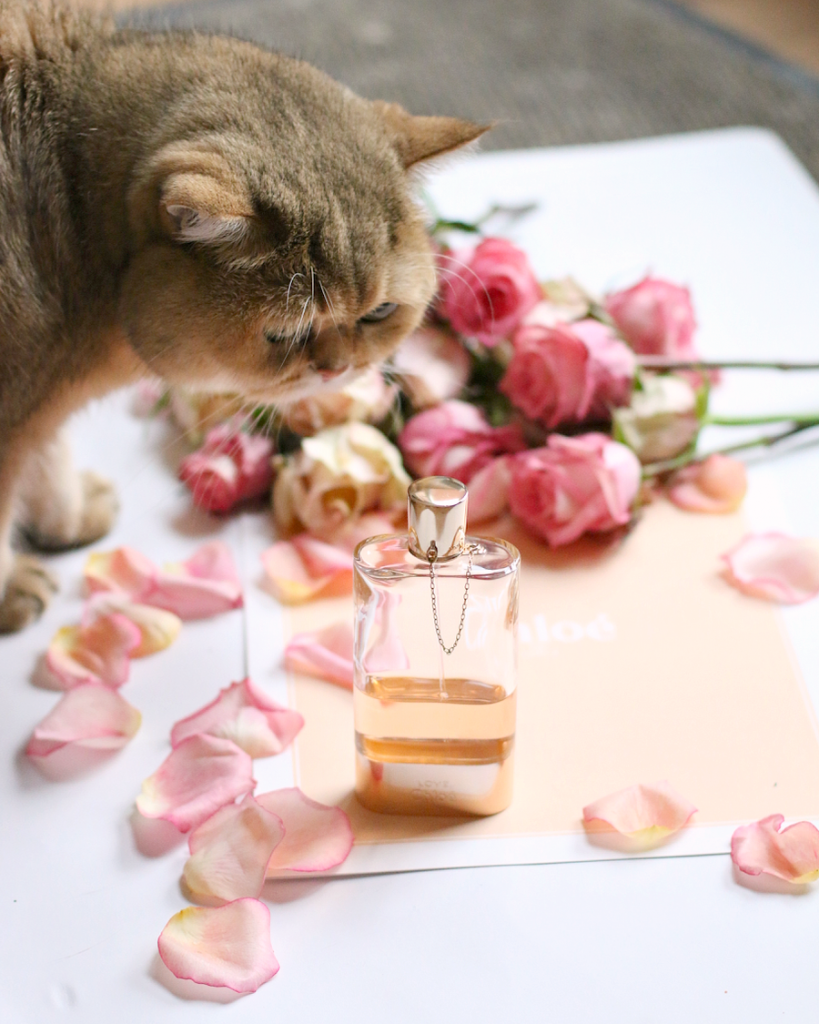 chloe fragrance review - 15