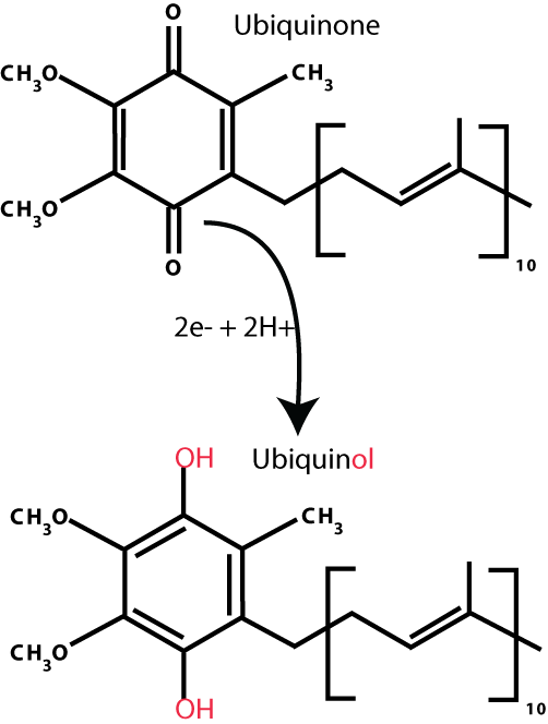 Ubiquinone_ubiquinol_conversion