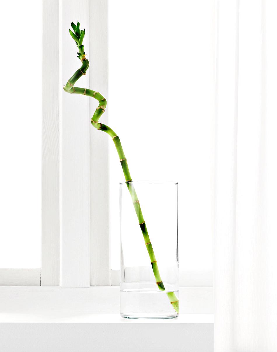6 x onderhoudsvriendelijke planten voor je interieur. Black Bedroom Furniture Sets. Home Design Ideas