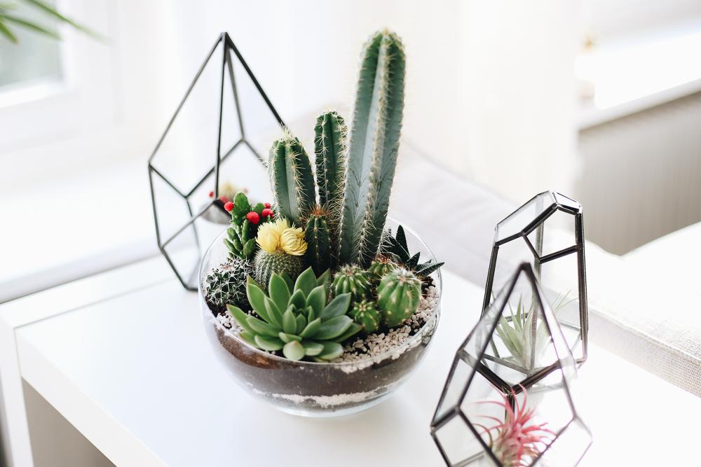 Onderhoudsvriendelijke planten voor je interieur ⋆ beautylab