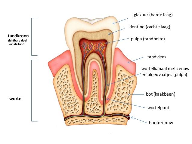 Dit Gebeurt Er Tijdens Het Bleken Van Je Tanden Beautylab Nl